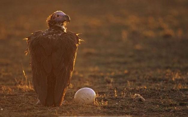 Başını kana gömen kuşlar!