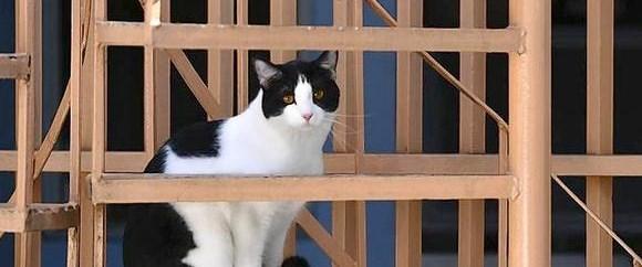 Başkan adayı kedi