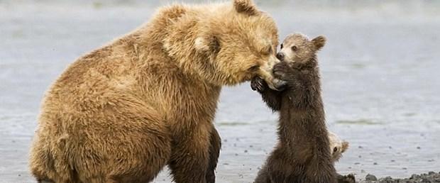 Besle ayıyı, ısırsın burnunu