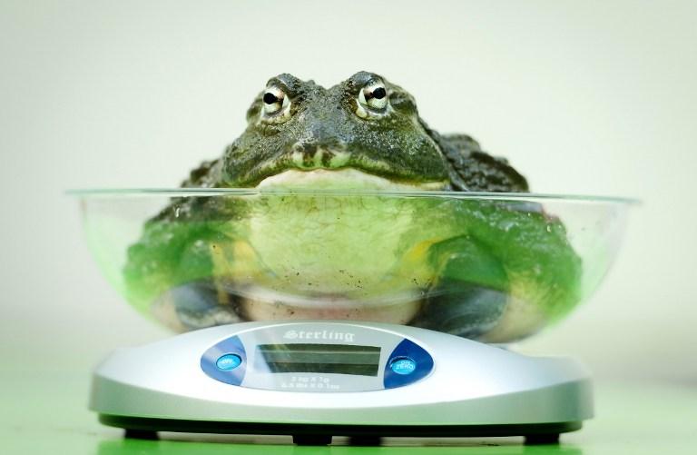 'Birkaç kilo daha verirsem harika olacak'