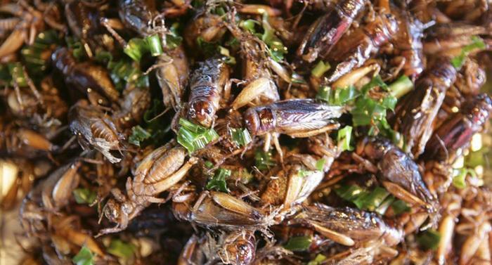 Böceğiniz afiyet olsun