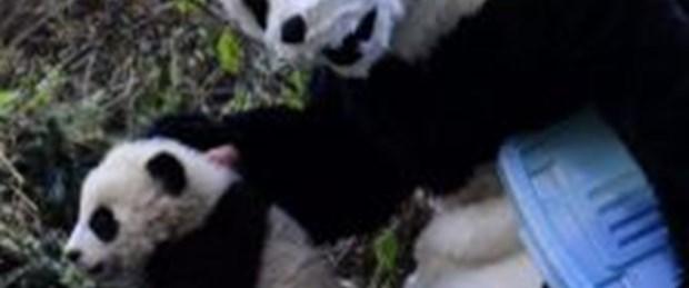 Bu bilim adamları neden panda kılığında?