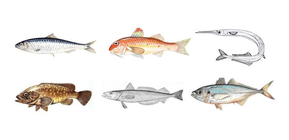 Küçük balık yoksa büyük balık da yok
