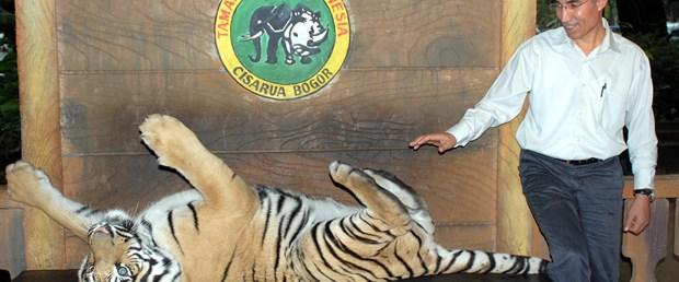 Cakarta'daki safari park halkın ilgi odağı oldu