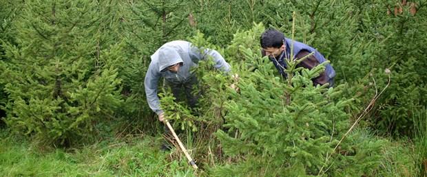 Çam ağaçları için nöbetteler