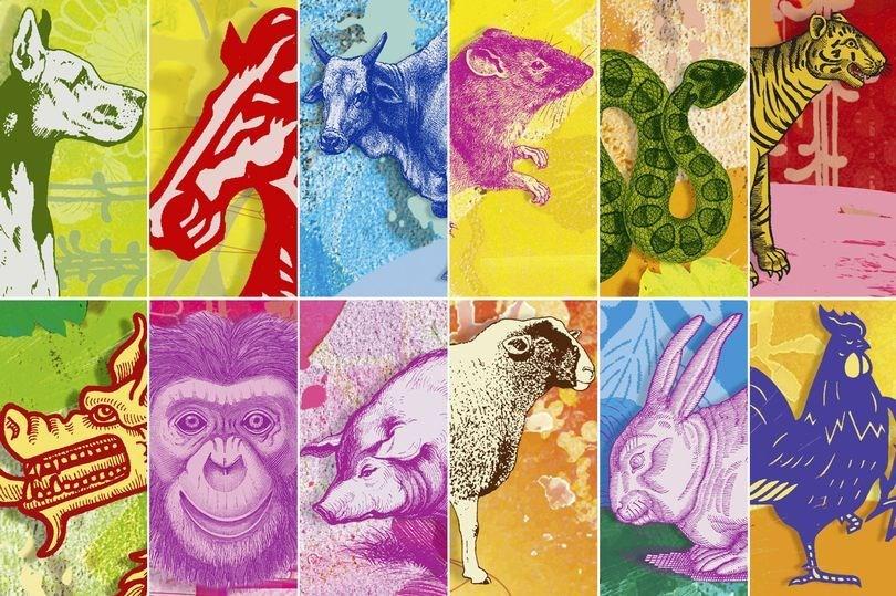 Çin astrolojisi, Astroloji, Fal, Burç, Kişilik, Köpek yılı