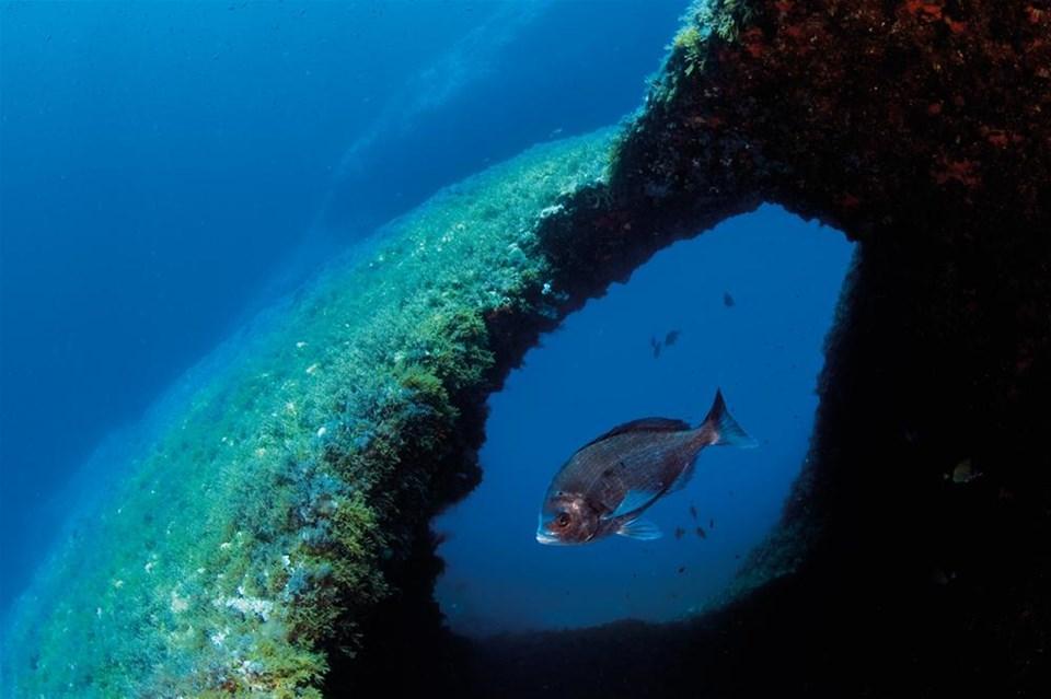 Cousteau'nun Akdenizi geri gelecek mi?
