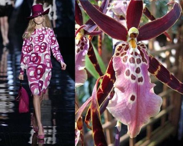 Dior ve Orkideler