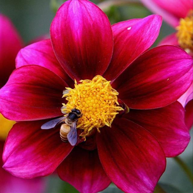 Doğanın 'ilkbahar defilesi'
