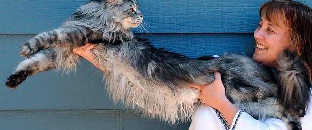 Dünyanın en uzun kedisi öldü