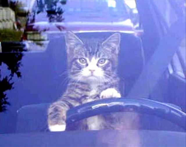 Ehliyetsiz sürücüler
