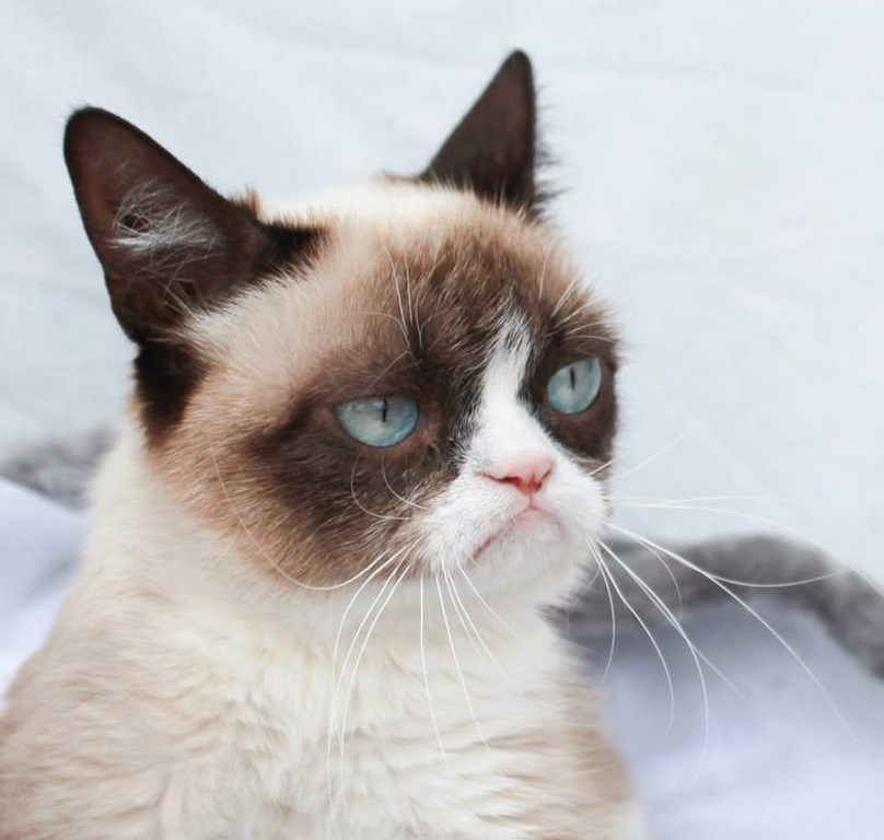 1. The Official Grumpy Cat