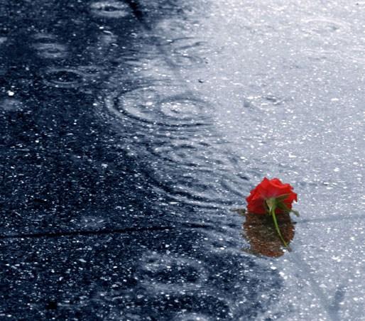 En Güzel 40 Yağmur Fotoğrafı 1 Ntv