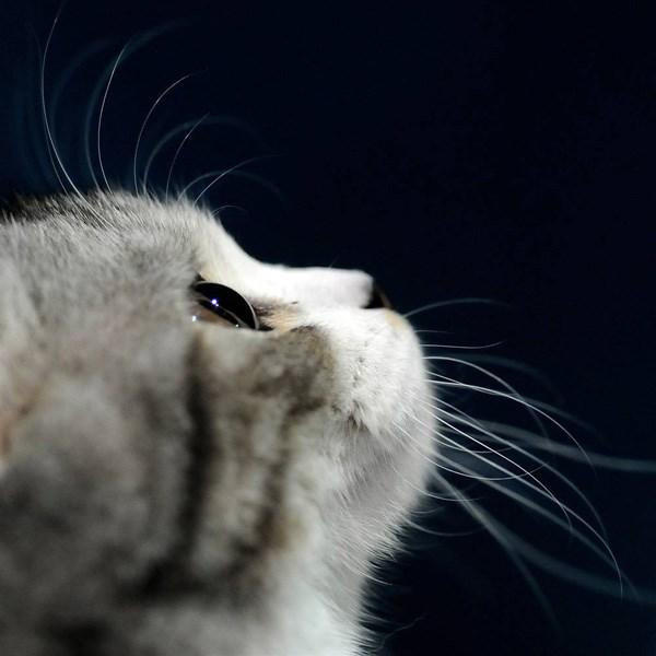 En güzel hayvan fotoğrafları