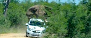 Fil turistlerin arabasını ters çevirdi