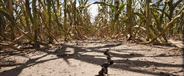 gıda-kıtlık-14-08-2015.jpg