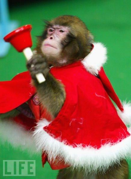 Hayvanlar aleminin Noel Babaları