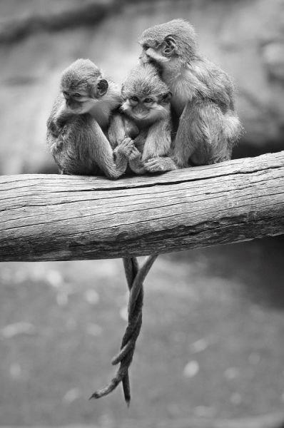 Hayvanların en sevimli halleri - 21