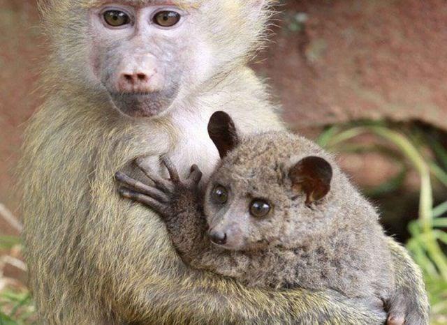 Hayvanların en sevimli halleri - 25