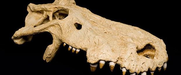 etobur-dinozor-15-06-09.jpg