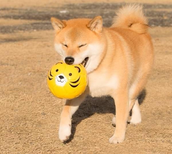 Instagram'ın popüler köpeği