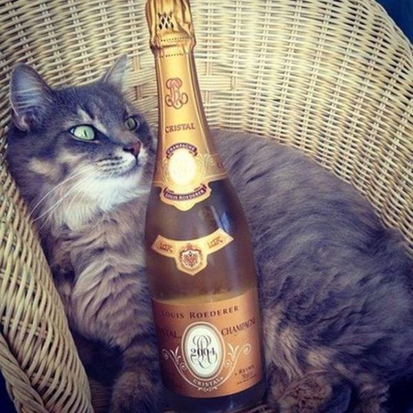 Instagram'ın zengin kedileri