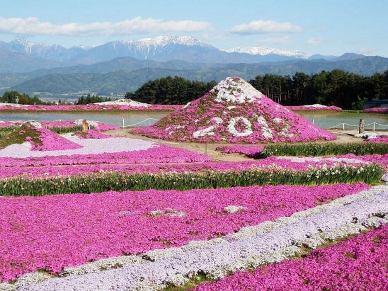 Japonya'nın pembe cenneti