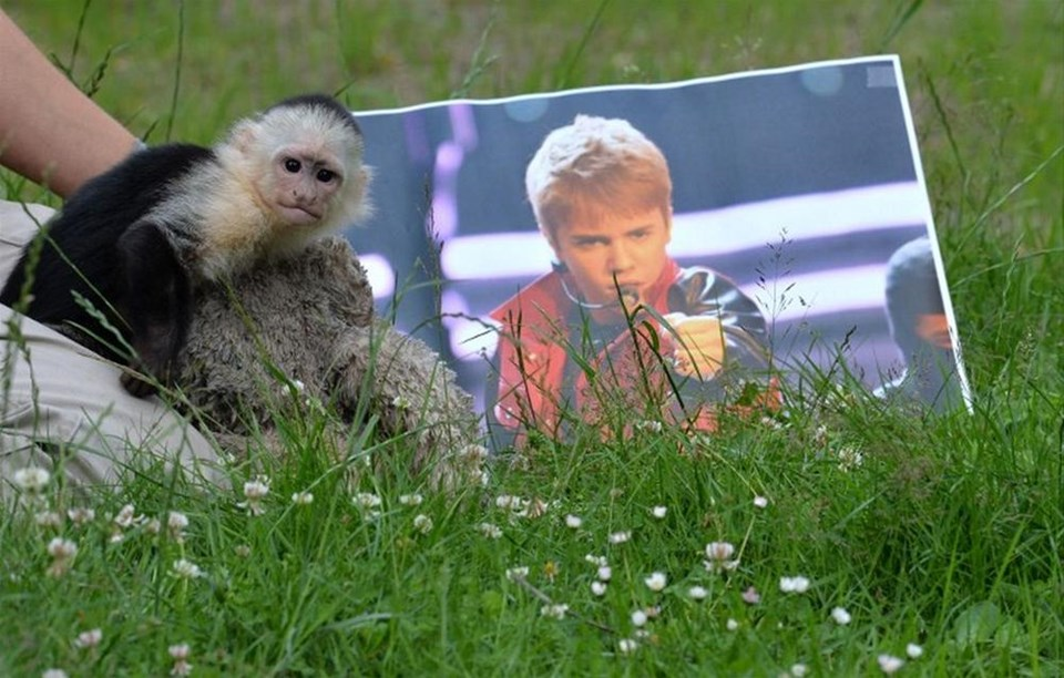 Justin'in maymunu yeni yuvasında