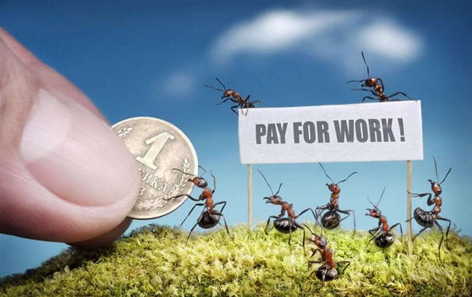 Karıncaların büyüleyici dünyası
