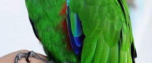 Kayıp papağan kapısını çaldığı eve sığındı