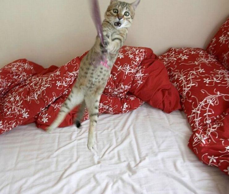 Kediler, kediler ...