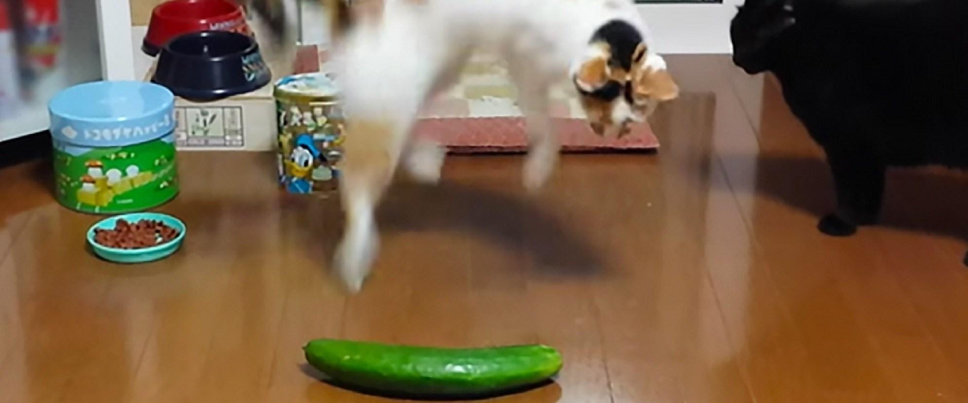 normal cat poop