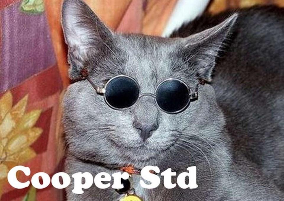 Kediler yazı tipi olsaydı