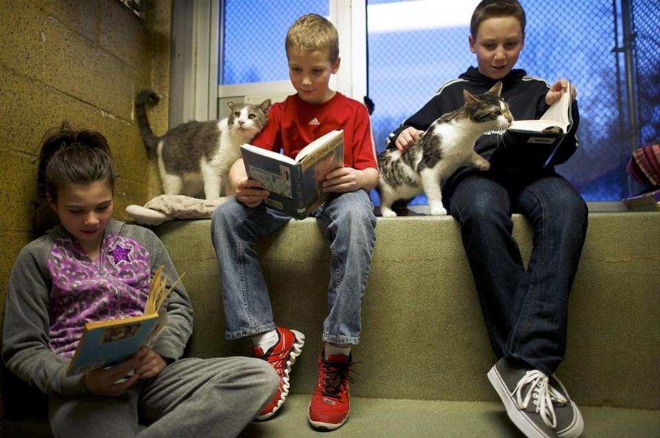 Kedilere kitap okuyan çocuklar