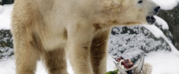 Knut 4 yaşında