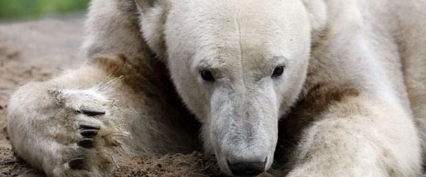 Knut 4 yaşında öldü