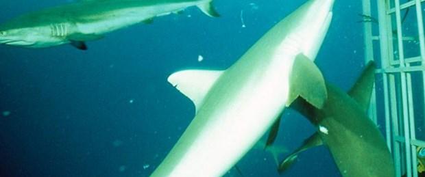 Köpekbalıklarına sığınak