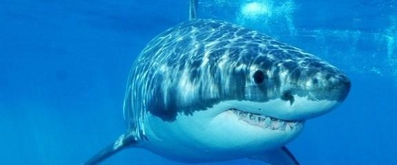 Köpekbalıklarından uyarı tweet'i