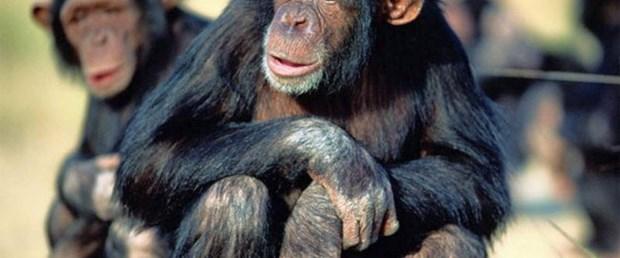 Maymun arkadaşını fotoğraftan tanıyor