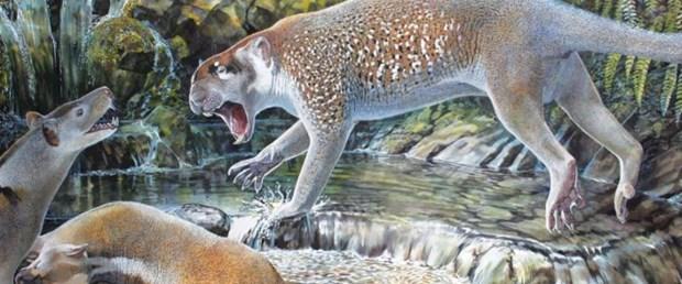 avustralyada-18-milyon-yil-onceki-marsupial-aslan-turu-ortaya-cikti_7705_dhaphoto1.jpg