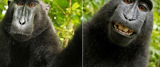 Maymun 'selfie'si tartışma yarattı