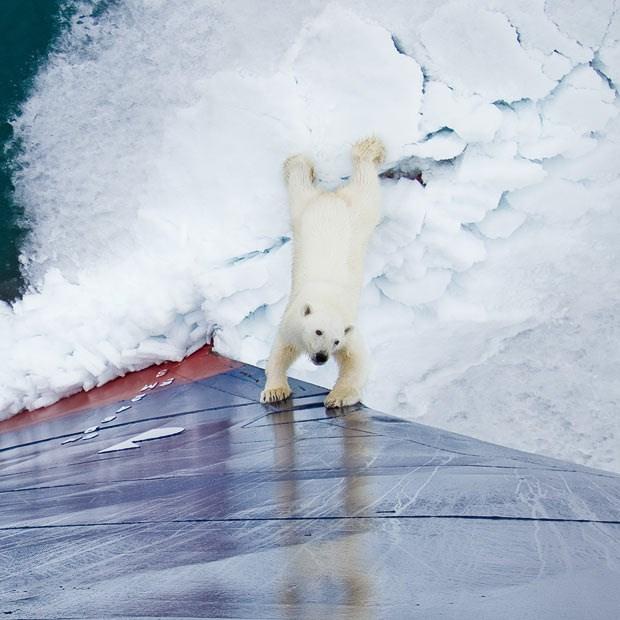 Minik kutup ayısı poz verdi