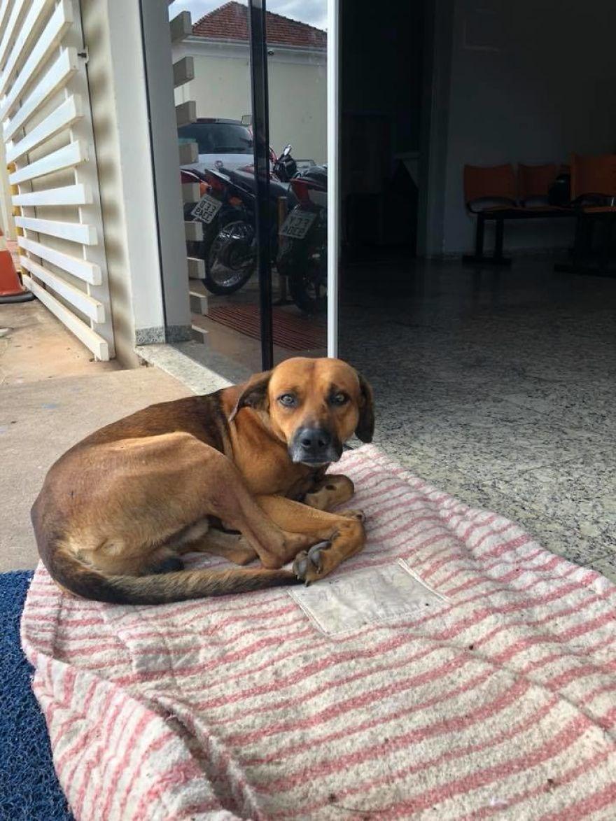 Brezilya, Köpek, evcil hayvan, hayvanlar, hastane, köpek sahibi olmak, sokak köpeği