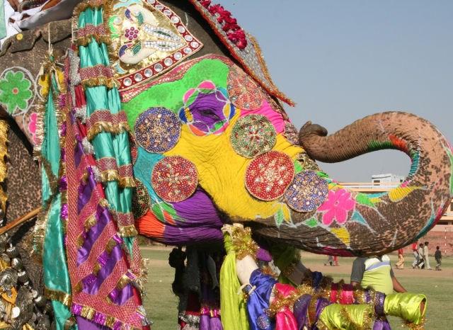Fil Festivali - Hindistan