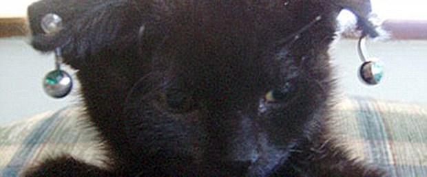 Piercingli kedi satan kadın zalimlikle suçlandı