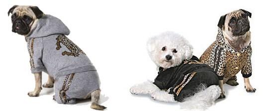 Roberto Cavalli köpekleri giydiriyor