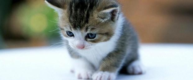 Sağır kediler daha iyi görüyor