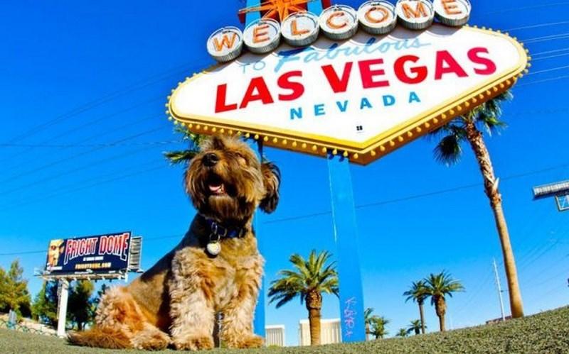 Las Vegas, ABD