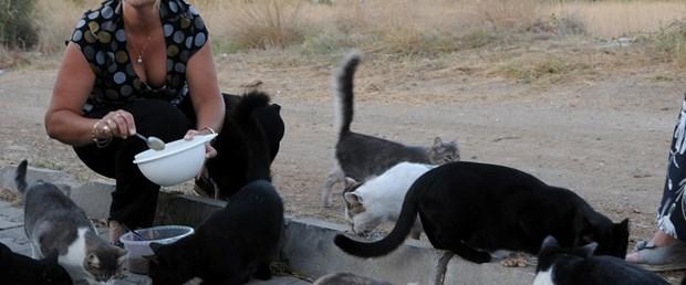 Sokak kedilerinin İngiliz annesi