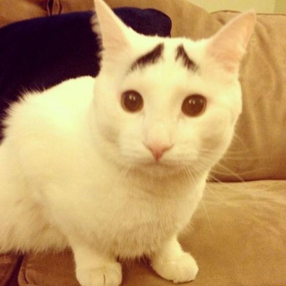 Sosyal medyanın 'en dertli' kedisi